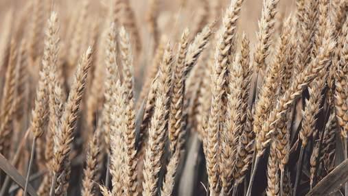 Україна скоротила експорт зерна