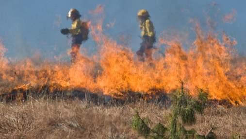 Спалювання трави і листя: шкода для довкілля та людей, штрафи і міфи