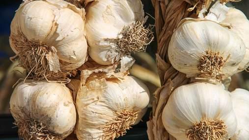 5 тонн чеснока с гектара без удобрений: фермер раскрыл секрет высокого урожая
