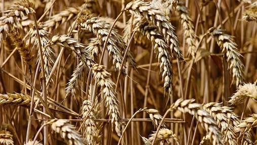 Ціни на зернові встановили 8-річний рекорд