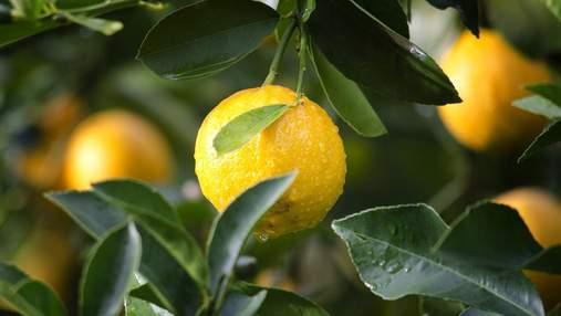 Начался лимонный сезон: какова ситуация на рынке