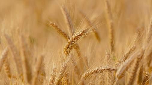 Цены на пшеницу резко обвалились