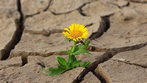 Сельское хозяйство и стихийные бедствия: какие главные угрозы и последствия