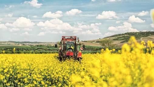 Новые гибриды озимого рапса как залог высокого урожая