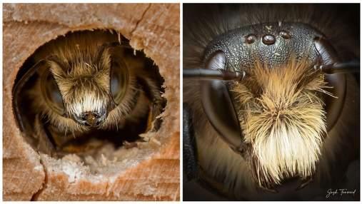 Оператор дикой природы сделал детализированные портреты пчел: невероятные фото