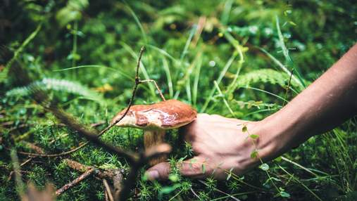 Справжні чи помилкові: як відрізнити їстівні гриби від отруйних