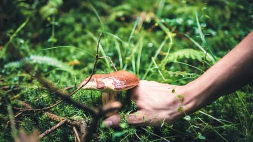 Настоящие или нет: как отличить съедобные грибы от ядовитых