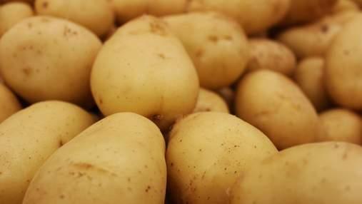 Почему в супермаркетах не дешевого отечественного картофеля: объяснение