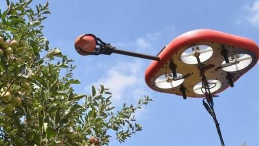 Робот для збирання фруктів: дивовижна інновація ізраїльського стартапу