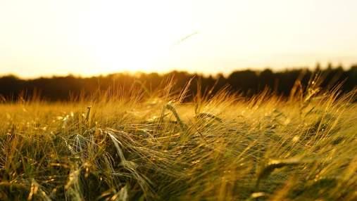 В Украине началась жатва