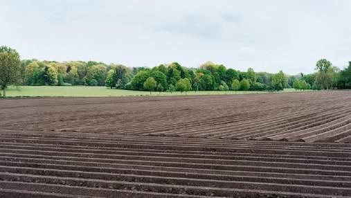 Открылся рынок земли: что это значит и каким законом регулируется