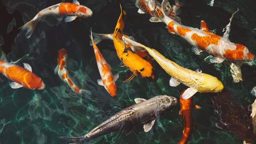 Ученые исследовали, как загрязнение воды химикатами может повлиять на рыб