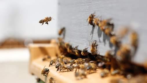 В России власти просят жителей остерегаться пьяных пчел