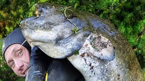 В Днепре поймали гигантского сома: был больше рыбака – фото