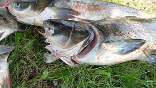 Возле плотины ДнепроГЭС массово погибла рыба – несколько тонн толстолобов