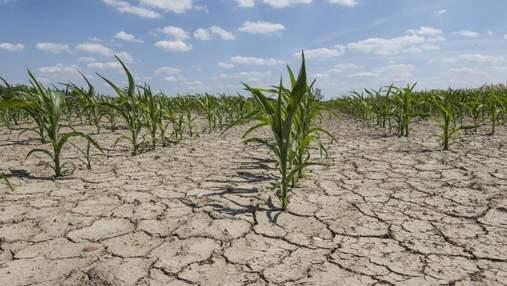 2/3 территории Украины могут стать зоной рискованного земледелия, – Лещенко