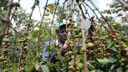 Криптовалютний бум у Кенії: чому місцеві фермери надають перевагу цифровим монетам