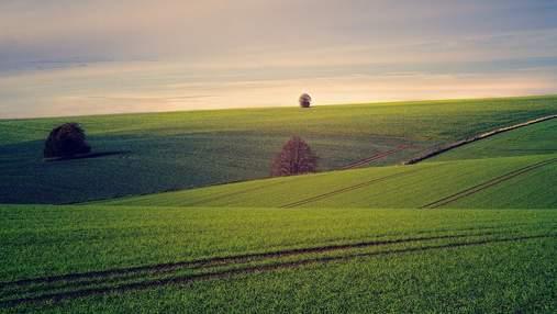 Прогноз сбывается: министр агрополитики назвал среднюю стоимость гектара земли