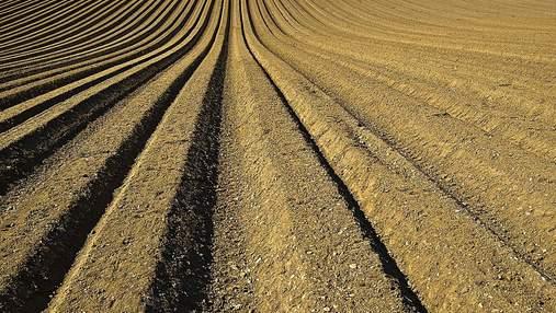 Цена на землю, проблемы заробитчан, 1 миллион на гектаре лаванды: важнейшие агроновости недели