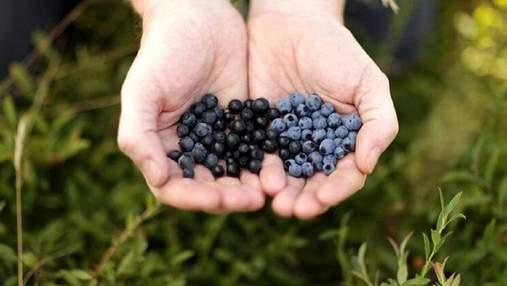 Дорога ціна та високий попит: які ягоди найзатребуваніші та куди їх продають