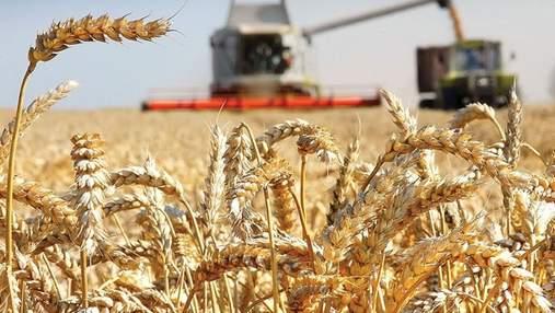 Найбільша експортна позиція України – зернові та олійні культури: що буде з цінами