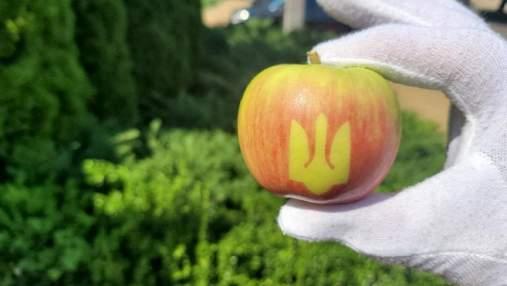 Тризуб на яблуках: українські садівники вирощують фрукти з картинками – фото