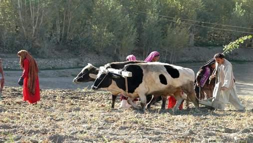 """Афганістан аграрний: важливі факти про """"гарячу точку"""" планети"""