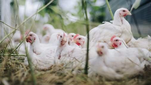 Курятина и яйца подорожали: где самые высокие и самые низкие цены