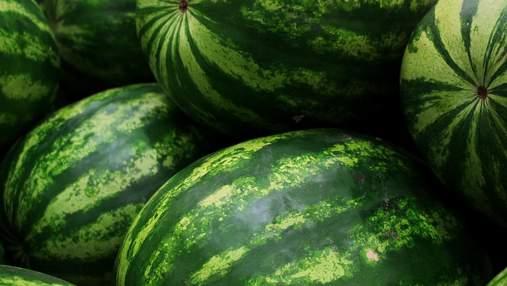 Кавунова криза: фермери змушені дешево віддавати врожай