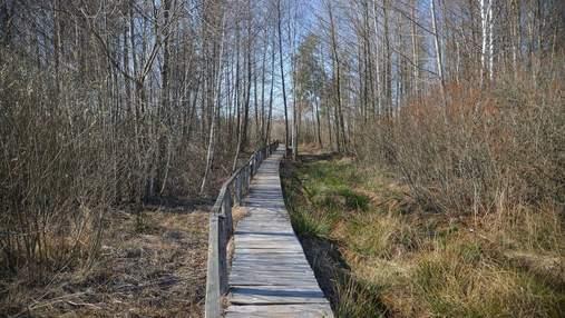 Жителі Рівненщини зможуть 2 місяці ходити в Білорусь по гриби та ягоди