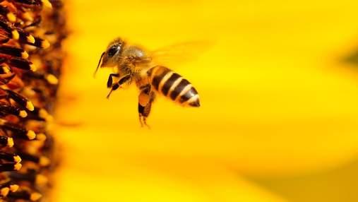 Топ-7 овочів та фруктів, що особливо потребують запилення бджолами