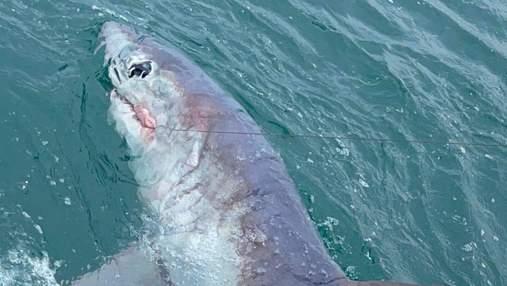 Рекордні розміри: британець зловив на вудочку 250-кілограмову акулу