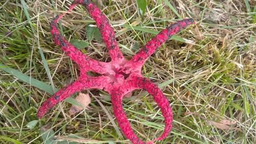 На Львовщине появились странные краснокнижные грибы: интересные фото