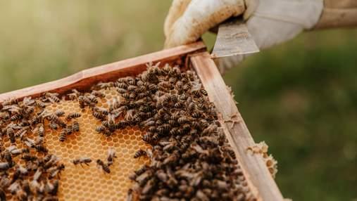 По сусідству з бджолами: в Англії готель облаштовує незвичайні будинки