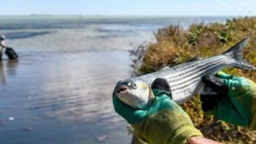 В десятки и сотни раз: штрафы за незаконный вылов рыбы в Украине ощутимо выросли