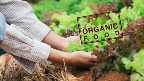 Украинские органические продукты: куда экспортируем и сколько зарабатываем