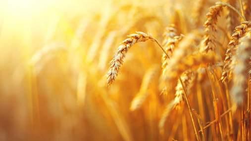 Україна стала заробляти значно більше на експорті трьох агрокультур