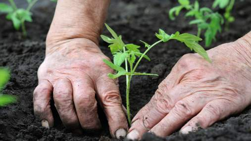 В Україні спростять реєстрацію нових рослин