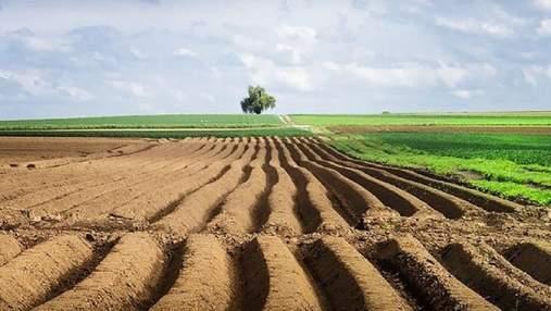 Ціна землі, дорога картопля і вигідний топінамбур: найважливіші агроновини тижня