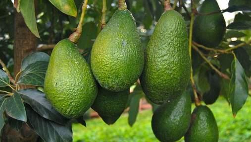 Полезный майонез: в Испании создали невероятный соус из авокадо