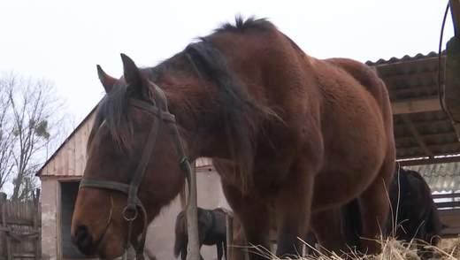 Палало 6 годин: на Київщині вдруге за тиждень спалили зимовий запас сіна для коней