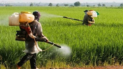 Продовольство і агроекологія: як впоратись з прийдешніми потрясіннями