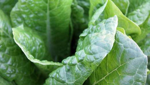 """Аграрний """"коронавірус"""": патогени рослин стрімко мутують і утворюють нові небезпечні штами"""